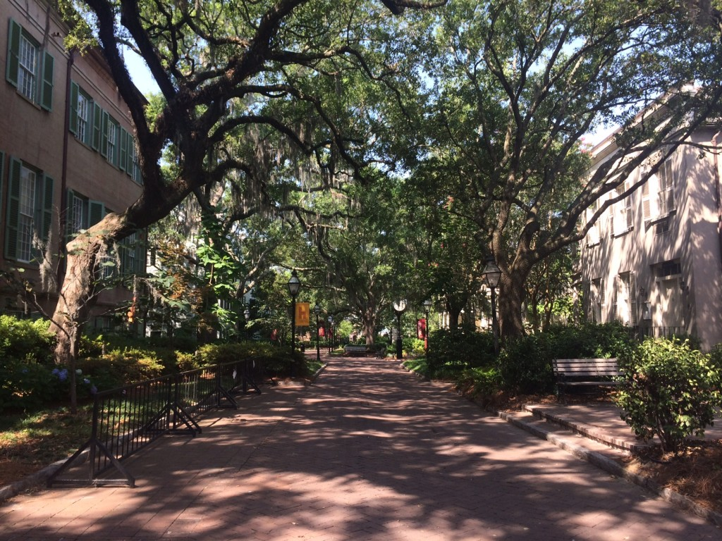 College of Charleston campus, June 22, 2014.