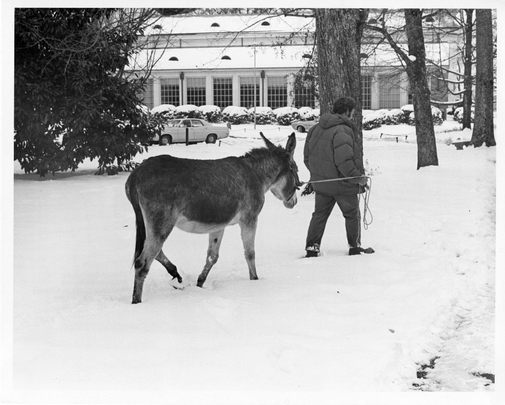 An unknown man leads a burro through the snow near Cunningham, December 1971.